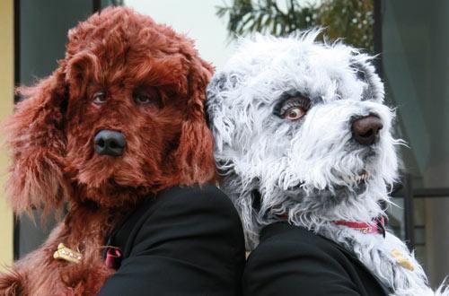"""Sniff, the Dog movie"" Toronto Debut December 13 & 17, 2009"