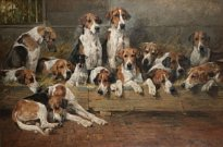 The Bitchpack of the Meath Foxhounds