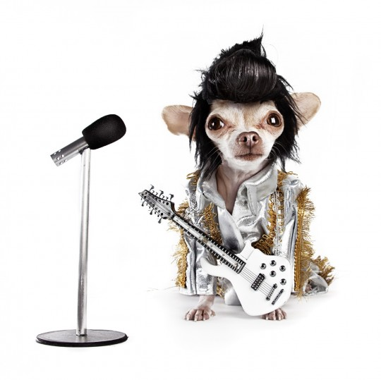 "Woofstock Launch: ""Doggie Doggelganger"" High Tea at King Edward Hotel Sunday, June 6"