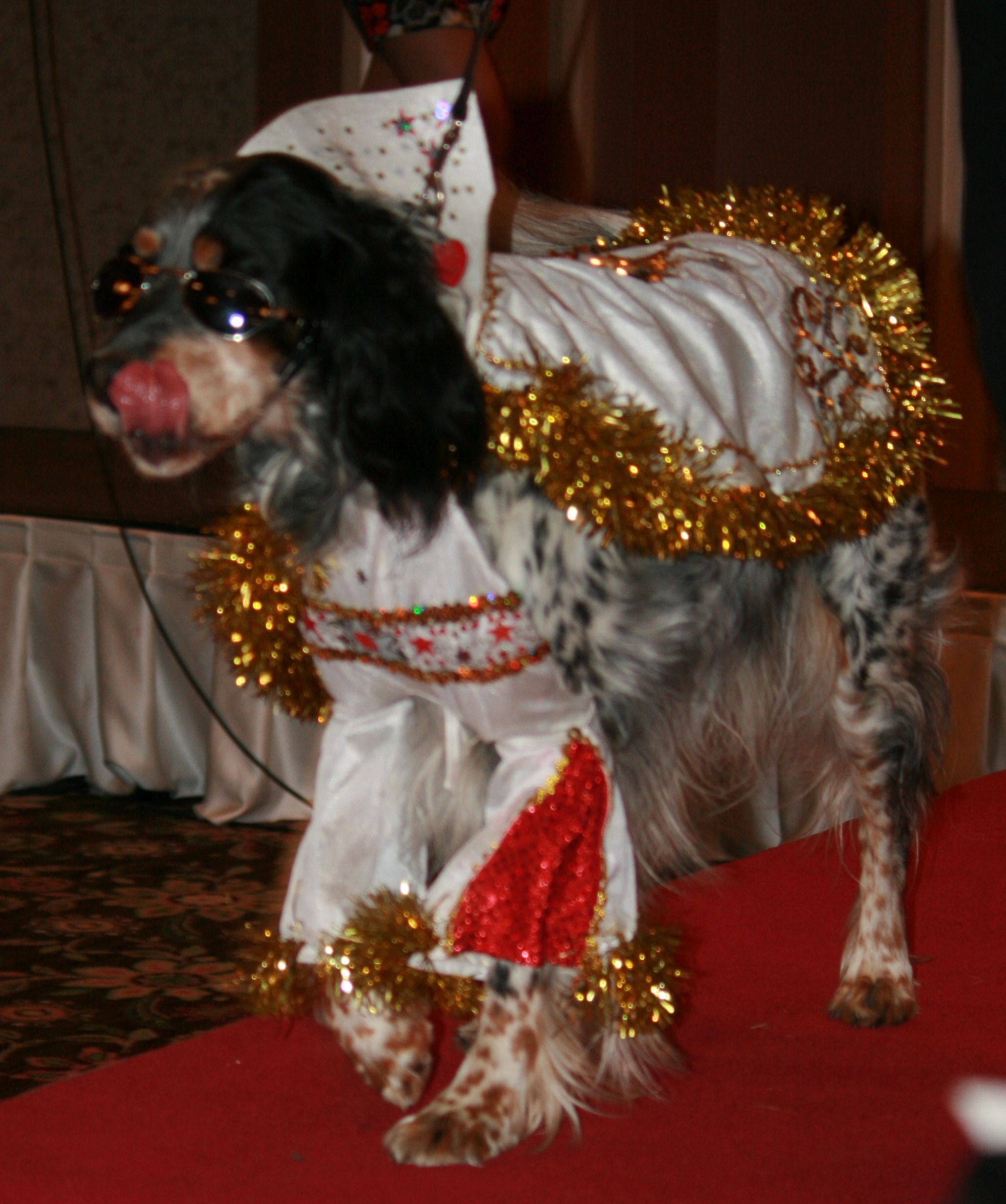 Doggie Doggelganger Elvis wins Celebrity Look-Alike Contest…