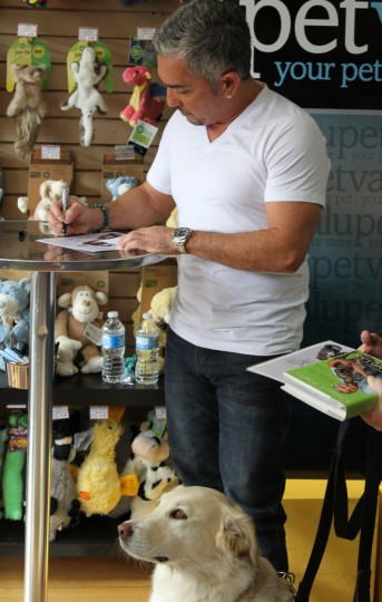 Cesar Millan and a sitting Golden Retriever