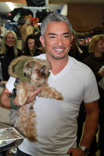 Cesar Millan with yorkie.
