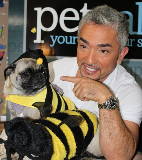 Cesar Millan pointing finger at pug
