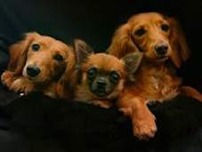 PetFunFest & Adopt A Pet-a-thon Is Back! On February 12 & 13, 2011–Studio 3, Downsview Park –