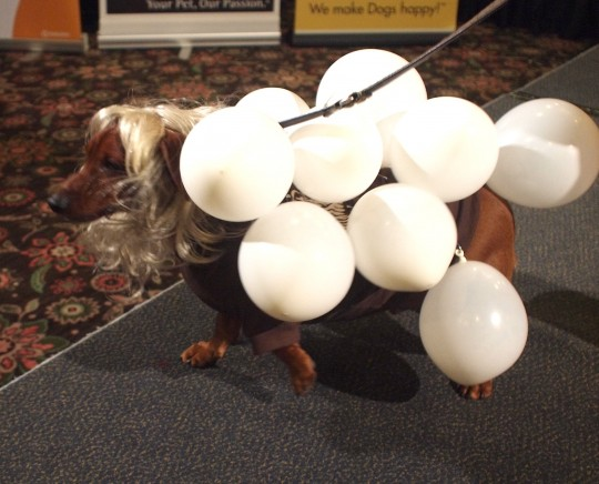 Gaga balloon dog