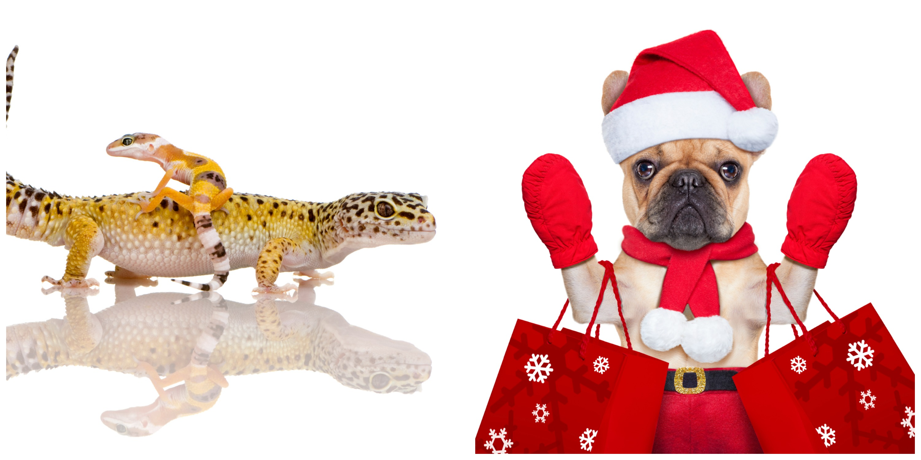 Reptile or Paw?…  Canadian Pet Expo, Woofstock held on same weekend  –  November 20 & 21, 2015