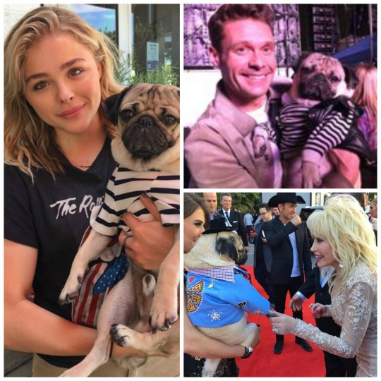 Exclusive with the canine king of social media doug the pug courtesy of doug m4hsunfo