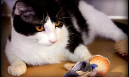Here Kitty, Kitty… October 29 is National Cat Day