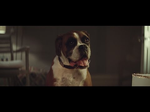It's a dogs life – Famed British Retailer John Lewis Christmas Advert