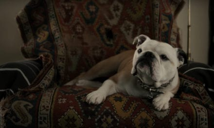 Nellie the English bulldog in ground-barking role in Jim Jarmusch's film Paterson