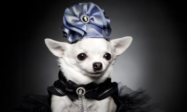 Meet Ninoksa Viggiano, a Pet Fashion designer with substance.