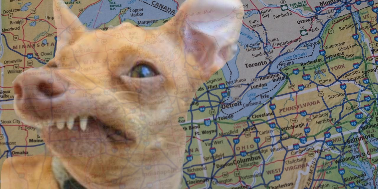 Canine social media sensation Tuna, is heading to Toronto on May 27 to attend the largest festival for dogs – Woofstock!