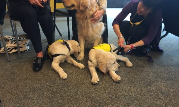 Wanted: CNIB is seeking Volunteer Puppy Raisers in Toronto, Winnipeg and Halifax