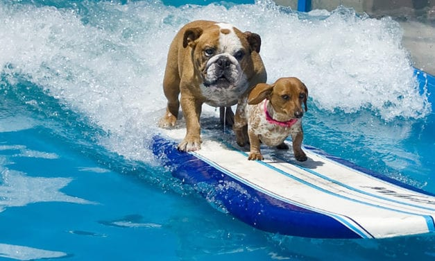 Chowabunga, dudes! It's surf's-up for dogs at Woofstock.