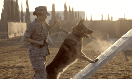 "Film: ""They aren't pets, they're warriors."" First-time canine actor Varco portrays Sgt. Rex in biopic Iraq War Film Megan Leavey"