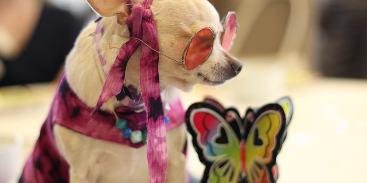 High Tea has gone to the dogs – Woofstock kick-offs its groovy 15th season.