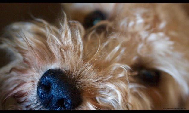 The Future of Pet Adoption…