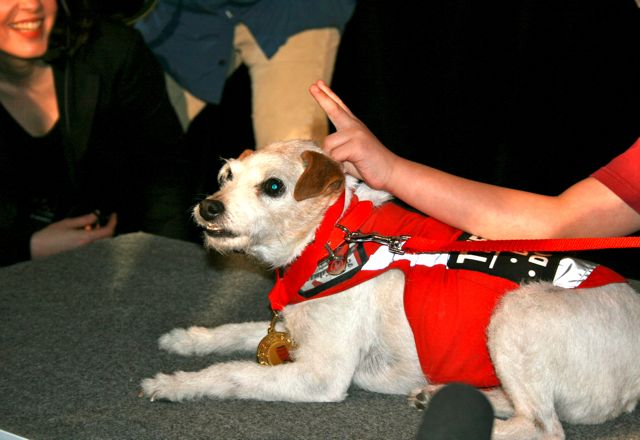 Honouring Canada's Pet Heroes