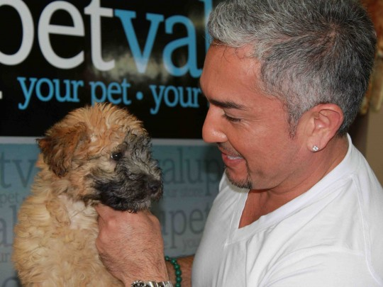 Cesar Millan with a wheaten terrier puppy