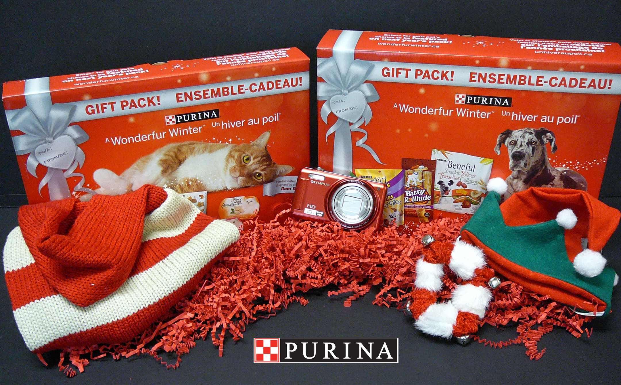 Enter your furry friend into the Purina Wonderfur Winter Contest – plus photo tips