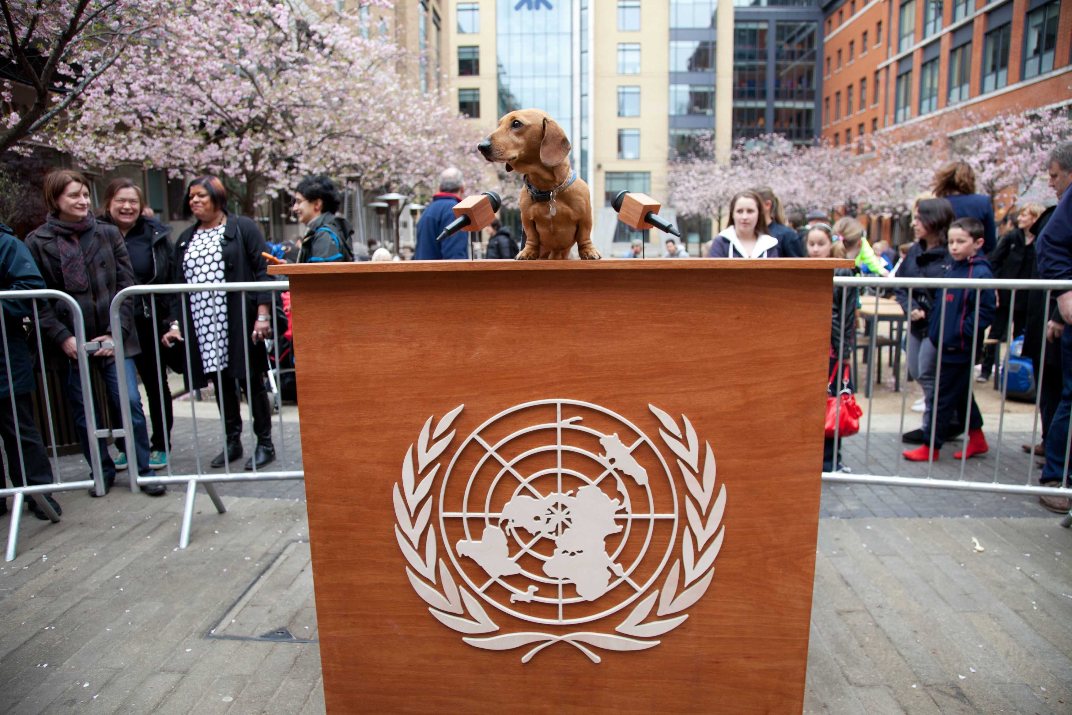 UN rights body opens with calls for international action – doggie style – with the North American premiere of Dachshund UN
