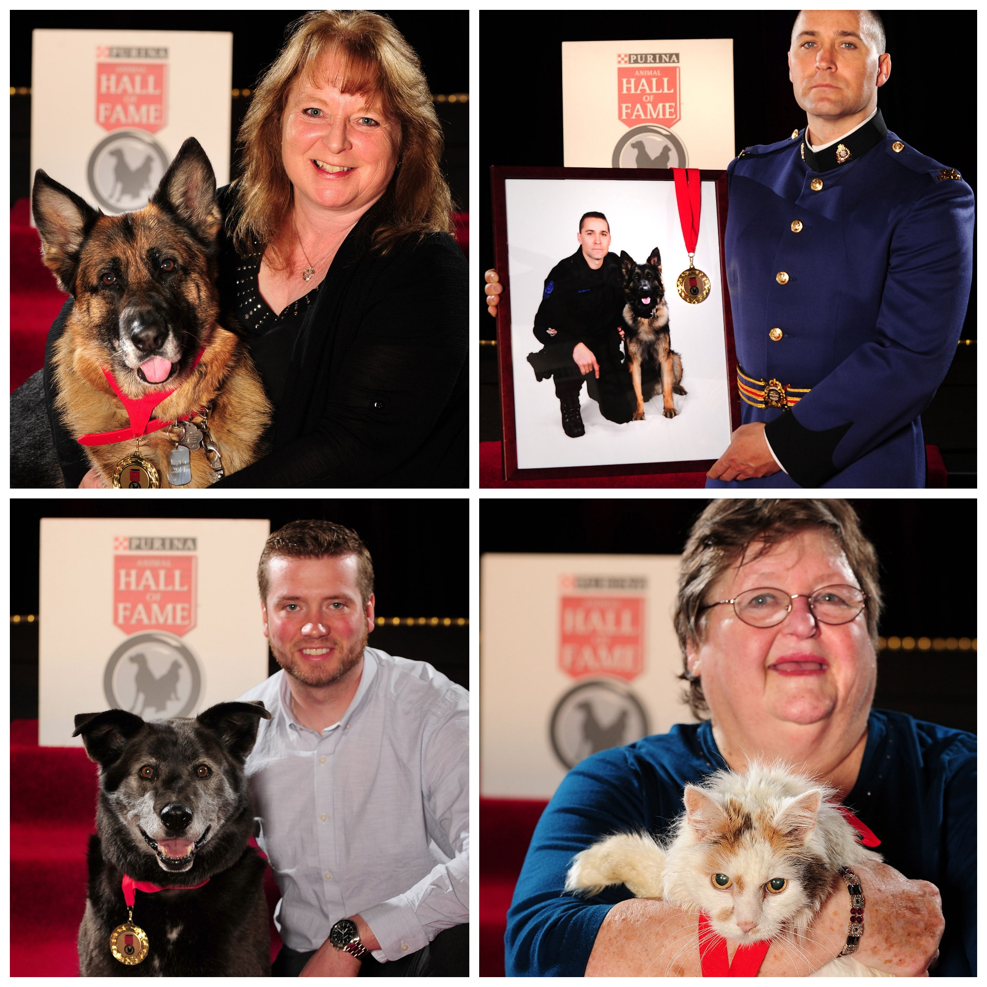 Tails of courage celebrated at the Purina Hall of Fame