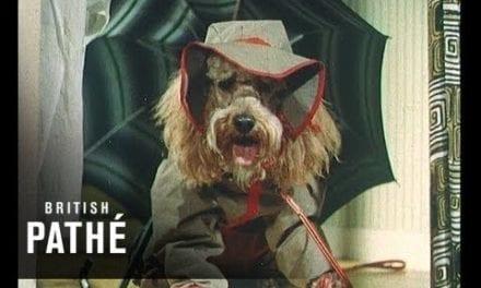 '50s Canine Fashionistas