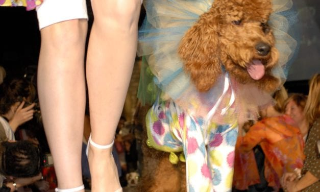 Casting Call! Wanted style-savvy pooches for television
