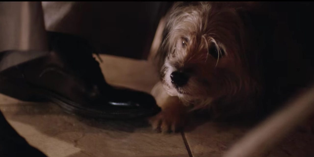 Adorable pooch alert from feature film Table 19 – Directed by Jeffrey Blitz