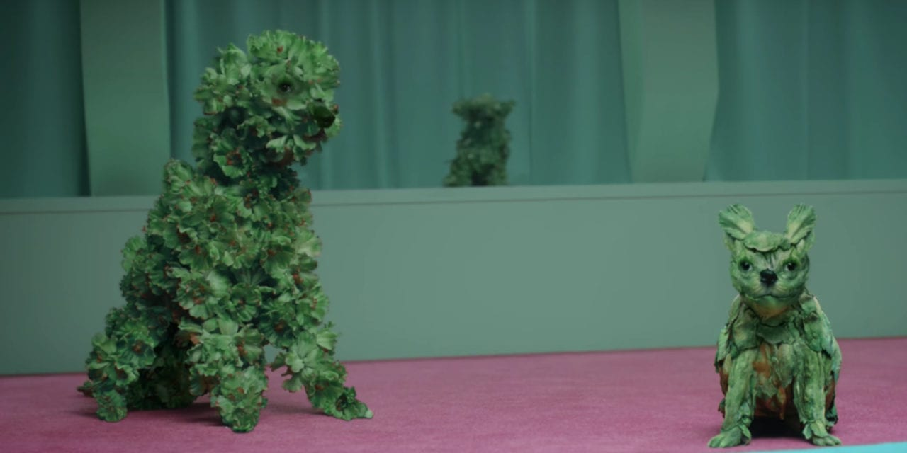 Mail Chimp's short film of dogs made out of kale.