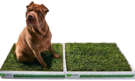 Poopertunity knocks – Real grass potty patches for dogs.