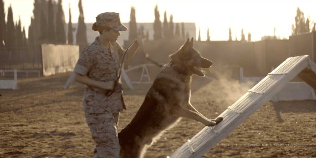 """Film: """"They aren't pets, they're warriors."""" First-time canine actor Varco portrays Sgt. Rex in biopic Iraq War Film Megan Leavey"""