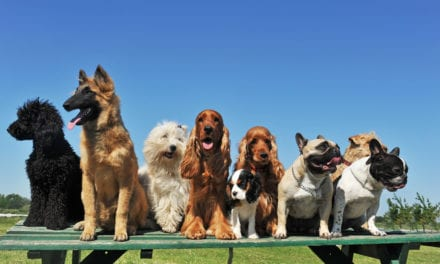 More than 50,000 Reasons Why You Should Attend Woofstock – May 25 & 26
