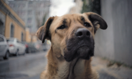 Stray: Day in the life of Zeytin, street dog from Istanbul
